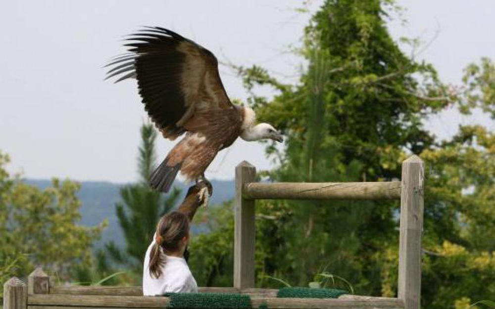 mots fleches vautour americain